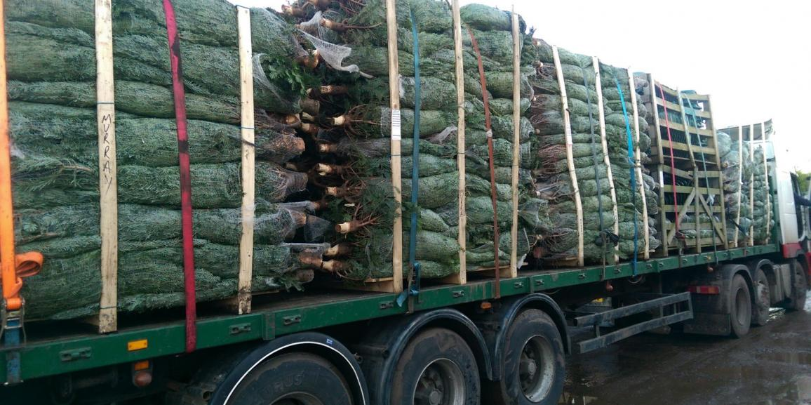 Christmas Trees For Delivery